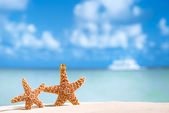 Starfish and coconut with ocean , beach and seascape — Stock Photo