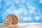 Nautilus shell with ocean , beach and seascape, shallow dof — Stock Photo