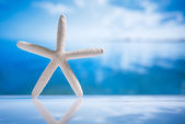 Starfish and reflection with ocean, wave and seascape — Stock Photo