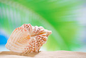 Clam seashell with ocean , beach and seascape, shallow dof — Stock Photo