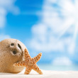 Coconut and starfish shell with sun, ocean , beach and seascape — Stock Photo #34200697
