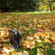 Old black suitcase in the fall forest — Stock Photo