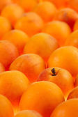 Apricots background, full frame, shallow DOF — Stock Photo