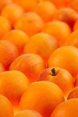 Apricots background, full frame, shallow DOF — Stock Photo