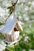 Little Birdhouse in Spring with blossom cherry flower sakura — Stock Photo