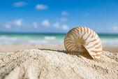 Shell nautilus s oceánem, pláž a přímořská krajina, mělké dof — Stock fotografie