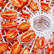 Sundried cherry tomatoes on food dehydrator tray, shallow dog — Stock Photo #39580079