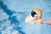 Nautilus Muschel in Kinder-Händen — Stockfoto