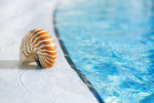 Nautilus shel — Stock Photo