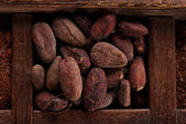 Roasted cocoa chocolate beans — Stock Photo