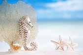 Seahorse with white starfish — Stock Photo