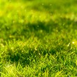 Stock Photo: Green grass lawn closeup