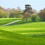 A rural landscape of green fields — Stock Photo #14007605