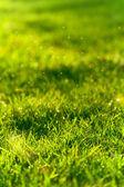 Green grass lawn closeup — Stock Photo