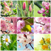 Beautiful spring flowers collage, nine photos — Foto de Stock