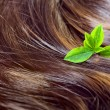 Hair care concept: beautiful shiny hair with highlights and gree — Stock Photo