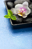 Orchid flower, green leaves and spa stones on wet blue backgroun — Stock Photo