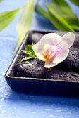 Orchid flowers with bamboo leaves and spa stones on wet blue bac — Stock Photo