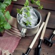 Garden tools and a pot of seedlings in a garden shed — Stock Photo