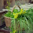 Basket of wild flowers and grass on country house wooden steps — Stock Photo #48110843