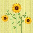 Royalty-Free Stock : Vector sunflower background