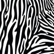 Vector abstract skin texture of zebra print pattern — Stock Vector #47946389