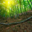 Green deciduous forest — Stockfoto #13519840