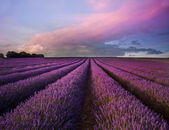 Paysage de champ de lavande magnifique coucher de soleil de l'été — Photo