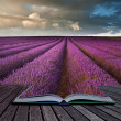 Creative concept image of lavender  landscape in pages of book - Stock Photo