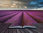 Creative concept image of lavender landscape in pages of book — Stock Photo
