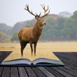 Stock Photo: Creative concept image of red deer stag in pages of book