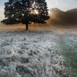 Stock Photo: Sunrise sunbeams bursting through tree onto foggy landscape