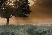 Sunrise sunbeams bursting through tree onto foggy landscape — Stock Photo