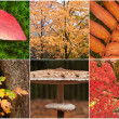 Beautiful compilation of Autumn Fall nature images landscape — Stock Photo