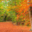 Vibrant Autumn Fall forest landscape image — Foto Stock