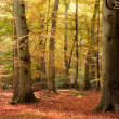 Vibrant Autumn Fall forest landscape image - Stock Photo