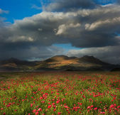 Landscape of poppy fields in front of mountain range with dramat — Stock Photo