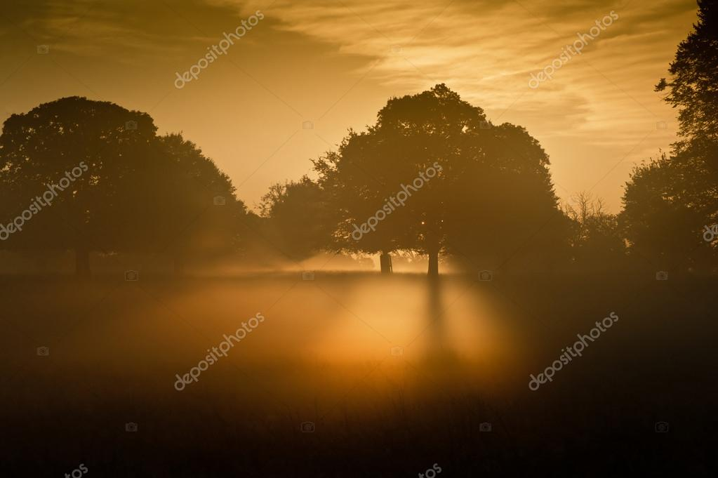 Rising sun illuminates fog from underneath making fog glow eerily — Stock Photo #14394319