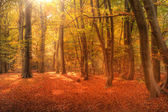 Vibrant Autumn Fall forest landscape image — Stock Photo