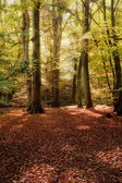 Vibrant Autumn Fall forest landscape image — Stock Photo