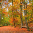 Vibrant Autumn Fall forest landscape image - Foto de Stock