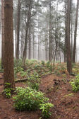 Foggy forest Autumn Fall landscape — Stock Photo