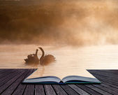 Mated pair of swans on misy foggy Autumn Fall lake touching scen — Stock Photo