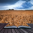 Golden wheat field under dramatic stormy sky landscape in pages - Stock Photo