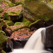 Autumn leaves and Burbage Brook in Padley Gorge in Peak District — Stock Photo