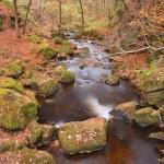 Burbage Brook flowing through Autumnal Padley Gorge in Peak Dist — Stock Photo