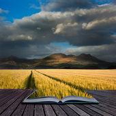 Beautiful landscpae of corn field leading to mountain range with — Stock Photo