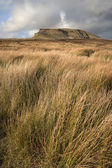 Pen-y-Ghent in distance behind moors in Yorkshire Dales National — Stock Photo