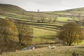 View across fields towards Malham Rakes in Yorkshire Dales Natio — Stock Photo
