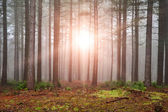 Landscape of forest with dense fog in Autumn Fall with sun burst — Stock Photo